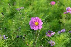 Artikel zum Verkauf von schorschi_dk auf ebay.de #Verkauf #Verkaufen #ZuVerkaufen #eBay # Privatverkauf #Sofortkauf Garden Paths, Garden Projects, Garden Design, Pink Flowers, Plants, Corner, Rustic, Ebay, Planting Flowers