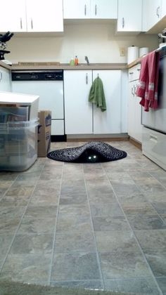 My cat Frank likes to lurk - I could see him doing this - what a darling!