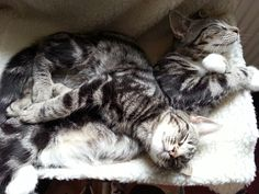 The boys can still fit in their radiator bed.....just!