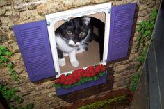 Sammi in her cottage!