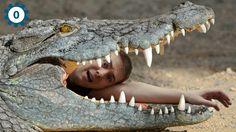 Crocodile facts http://www.youtube.com/watch?v=b7KBv0UkgpY