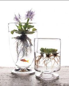 little water gardens