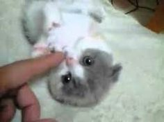 Miniğim ben çok küçüğüm ben