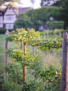 Potager Garden, Fruit Garden, Edible Garden, Vegetable Garden, Garden Landscaping, Garden Fences, Herbs Garden, Espalier Fruit Trees, Vine Trellis