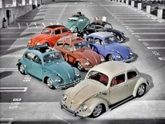 Lots of lovely classic Beetles