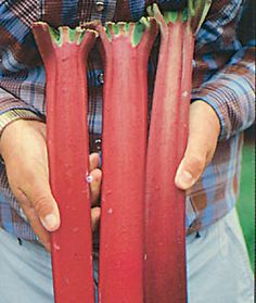 CRIMSON RED RHUBARB  DEEPEST RED COLOR OF ANY RHUBARB    Sweetest of all rhubarb varieties!