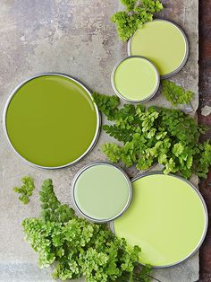 "- Get this beautiful look and more home decor at purehome.com -""Fern Greens"" - from top right: Frolic, Spring Leaf, Antique Green, Green Twig, and Season's Promise."