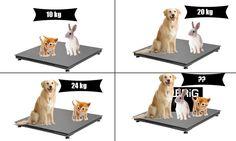 Το γατάκι και ο λαγός ζυγίζουν 10 kg. Ο Σκύλος και ο λαγός 20 kg. Ο Σκύλος και το γατάκι 24 kg. Πόσο είναι το συνολικό βάρος;
