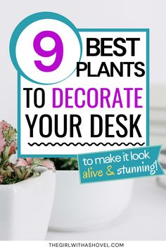Looking for the perfect houseplants to put on your desk?! Look no further! Use any of these 9 Best Plants for your Desk that are all small, clean, and low-maintenance! Just grab one of these beauties and liven up your space in no time! Ivy Plants, Jade Plants, Cool Plants, Best Desk Plants, English Ivy Plant, Purple Shamrock, Arrowhead Plant, Small Indoor Plants, Apartment Plants