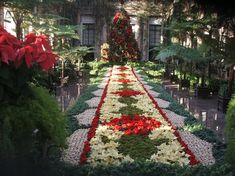 Longwood Gardens Christmas 2015 - Yahoo Image Search Results