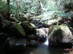 Oahu Family Activities: Monoa Falls Hike