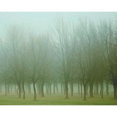 Landscape photo, foggy emerald green woodland, nature, trees, forest,... ($20) ❤ liked on Polyvore