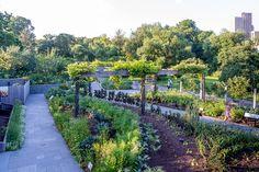 brooklyn botanic vegetable garden - Google Search
