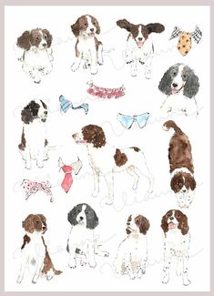 CLIP ART Watercolor English Springer Spaniel & Collar by Vianneart