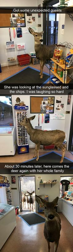 20 Best Funny Animal Photos for Saturday Night. Serving only the best funny photos in 2019 that will help you laugh today. Funny Animal Jokes, Funny Animal Photos, Cute Funny Animals, Stupid Funny Memes, Funny Relatable Memes, Funny Cute, Funny Dogs, Funny Pictures, Funny Humor