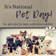 It's National Pet Day! So, give your fur baby some extra cuddles! | Read more about my dog mom life at Not So Mommy..., an infertility, childless, dog mom blog. | National Pet Day | Pet Day | Pets Day | Pet's Day | National Pets Day | National Pet's Day | Dog Mom | Dog Moms | Dog Mom Blog | Dog Mom Blogs | Fur Mom | Fur Moms | Fur Mama | Fur Mamas | Pet Parent | Pet Parents | Fur Mommy | Dog Mommy | Dog Lover | Animal Lover | Dog Lovers | Animal Lovers | Dogs and Puppies | Puppies and Dogs Puppies Puppies, Cute Puppies, Cute Puppy Photos, National Pet Day, Cuddles, Mom Blogs, Dog Mom, Fur Babies, Dog Lovers