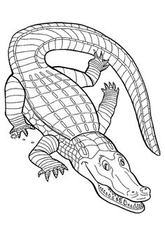alligator drawing and coloring page | animals- coloring pages ... - Crocodile Coloring Pages Print