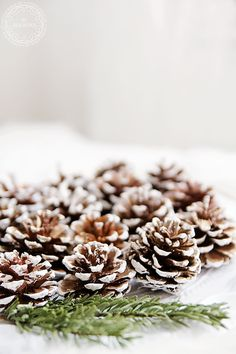 frosted pine cones//