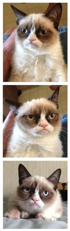 Grumpy Cat pictures