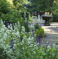 Sarah Price at Battersea Park. The white spires are white Valarian, Centranthus alba