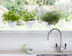 www.littleurbanfarmers.com.au Hanging Gardens. Flat packed plat pots that suction cup to your kitchen window allowing you to grow fresh herbs inside. FOLD - LOCK- PLANT- HANG