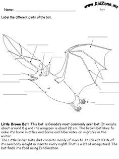 Spider Anatomy   Spider Crafts & Activities For Kids ...
