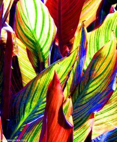 palm leaves wallpaper | Palm Leaves