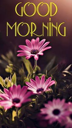Good Morning Cards, Good Morning Coffee, Good Morning Flowers, Good Morning Messages, Good Morning Good Night, Good Morning Wishes, Beautiful Morning, Good Morning Images, Good Morning Quotes