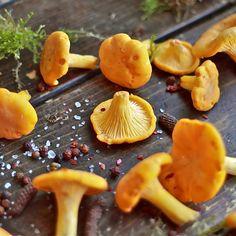 Fab.com | Wild Chanterelle Mushrooms 2lb