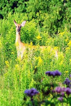 8  Parque Nacional da Peneda Gerês - 8 (© stock.xchng)