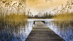 #body of water #dawn #dock #dusk #evening #fall #lake #landscape #light #nature #outdoors #pond #reflection #river #scenic #sunset #tranquility #trees #water #wood #royalty free images