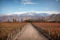 Wine And Beer, Railroad Tracks, Patagonia, Wines, Madrid, Vineyard, Mountains, World, Travel