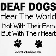 Being a deaf dog is certainly not a handicap!