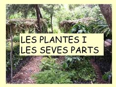 Ppplantes by via slideshare Natural, Ex Libris, Places To Visit, Presentation, Science, History, Garden, Cos, Videos