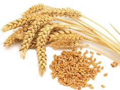 Get details about the Government plans to suspend the wheat export due to recent hailstorms and fear of crop loss. Also know about the decision taken by ministry of Food. Also know about the floated export tenders by Government sector players PEC and MMTC Ltd.
