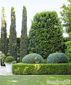 Evergreen planting scheme with strong structural elements. Varying shapes. Photo: Victoria Pearson