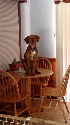 Mollie is ready for dinner http://ift.tt/2rebqXl