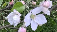 Dream Garden, Plants, Flora, Plant, Planting