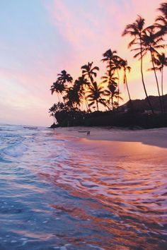tropical   Tumblr
