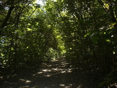selva en galeria entrerriana - Buscar con Google