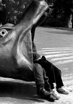 Crandon Park Zoo | Flashback Miami Gentle Ben, Crandon Park, Magic City, Coral Gables, Photo Archive, South Florida, Miami, Childhood, Photos