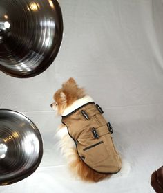 Behind the Scenes: Touch of Europe Dog Clothing Photo Shoot. Doggie vests, clothing and accessories coming soon!