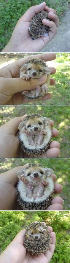 precious hedgehog makes me smile
