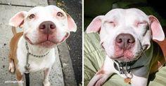 Um cachorro que não para de sorrir há 12 anos. E tem um bom motivo para isso...