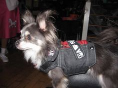PAWnk Basic Denim Iggy chien Jacket par ReallyLoveDogs sur Etsy