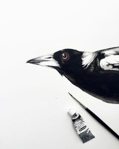 Quick study of a Magpie for a future painting.✍🏼 #magpie #watercolour #blackandwhite #australianbirds