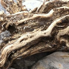 Driftwood. By Kathy