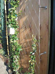 Шпалера для вьющихся растений своими руками. Опоры для плетистых роз и винограда   МирФБ