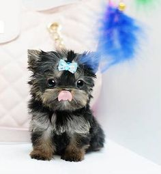 aww. I swore I wouldn't get another dog, but I want this little sweetpea!