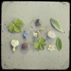 Nature Collection #photography